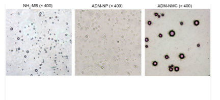 Metformin inhibits cholesterol‑induced adhesion molecule expression via activating the AMPK signaling pathway in vascular smooth muscle cells